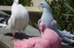 В Индии задержали 150 голубей по подозрению в шпио…